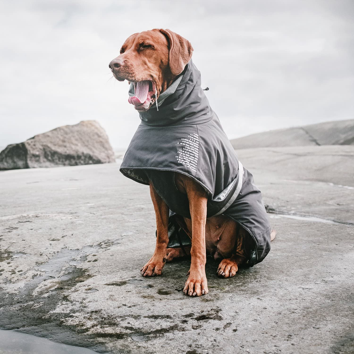 16 Stylish Raincoats for Large Dogs​ - feat. the Hurtta Extreme Warmer Dog Winter Jacket available from Amazon.