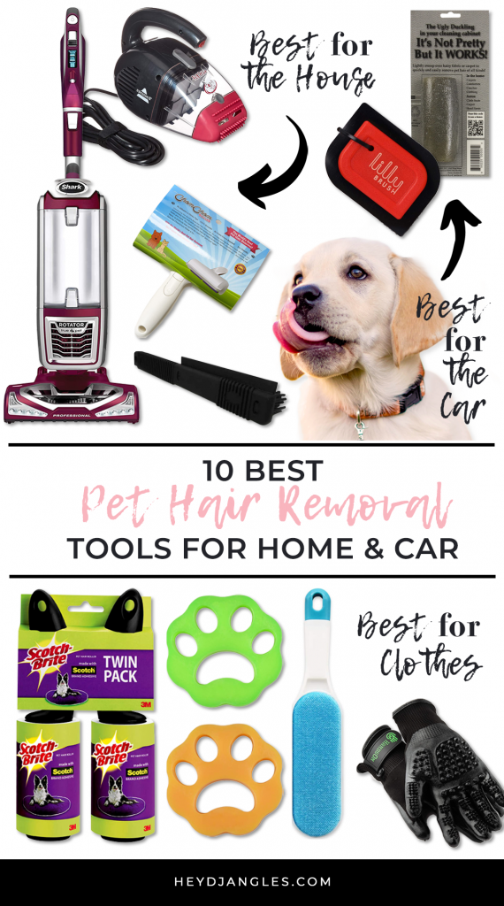 10 Best Pet Hair Remover Tools For Your House and Car