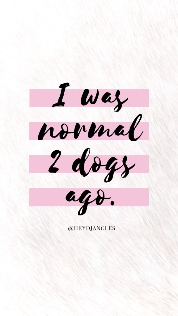 I was normal 2 dogs ago. Dog quote wallpaper - Hey, Djangles.