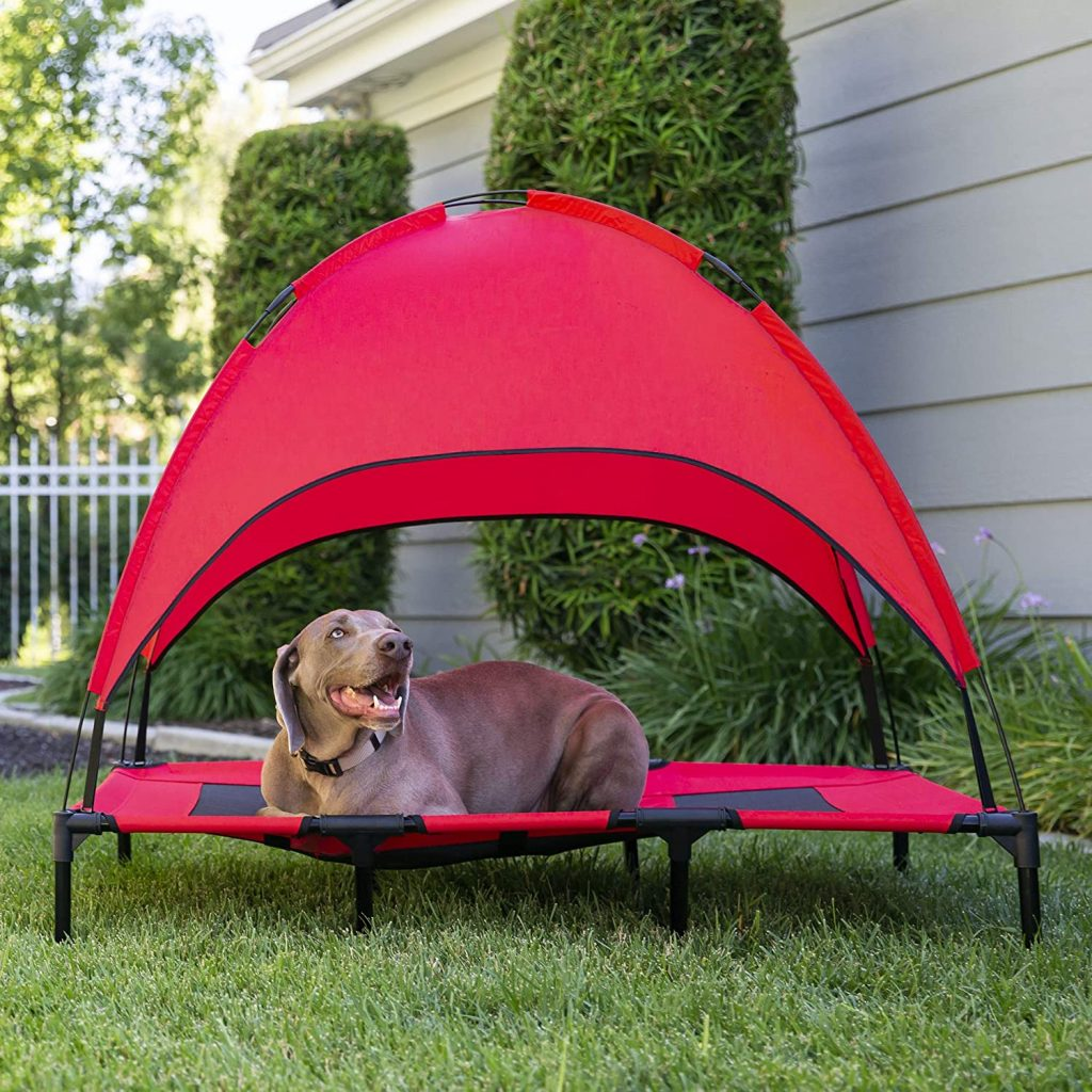 Shaded dog bed, Weimaraner - Image via Amazon, feat. Raised Mesh Cooling Cot Dog Bed with Canopy Shade.