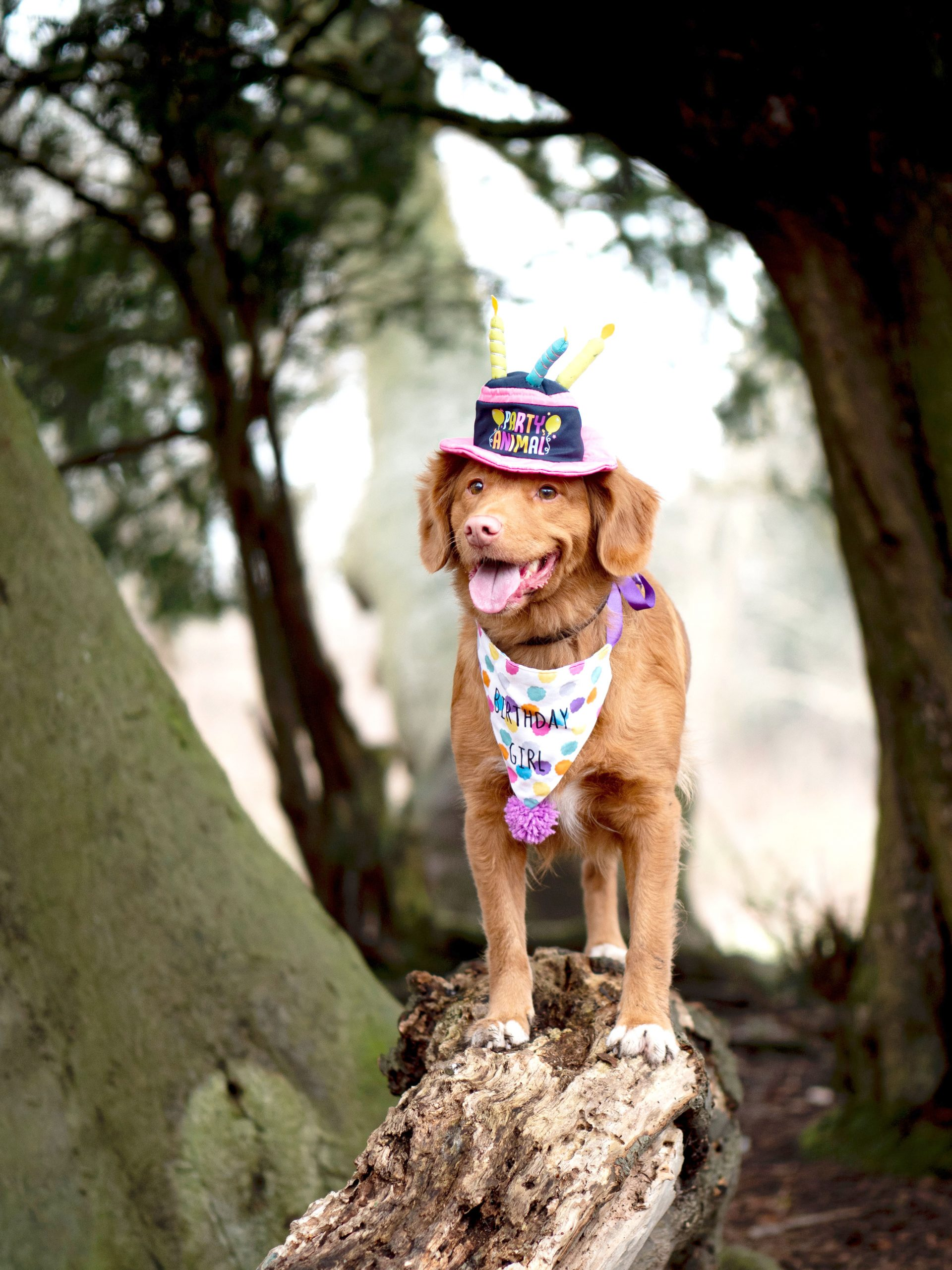 12+ Cute Doggy Gift Baskets and Birthday Boxes For Special Pups