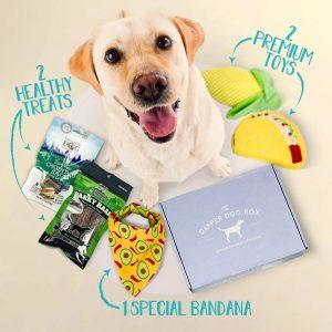 The Dapper Dog Box via Amazon - subscription box, doggy gift baskets.