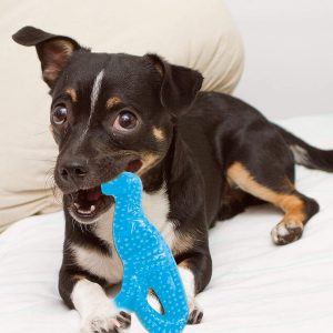 10 Freezable Puppy Teething Toys Your Pup Will Love - feat. the Nylabone Puppy Dental Dinosaur Chew Toy via Amazon.