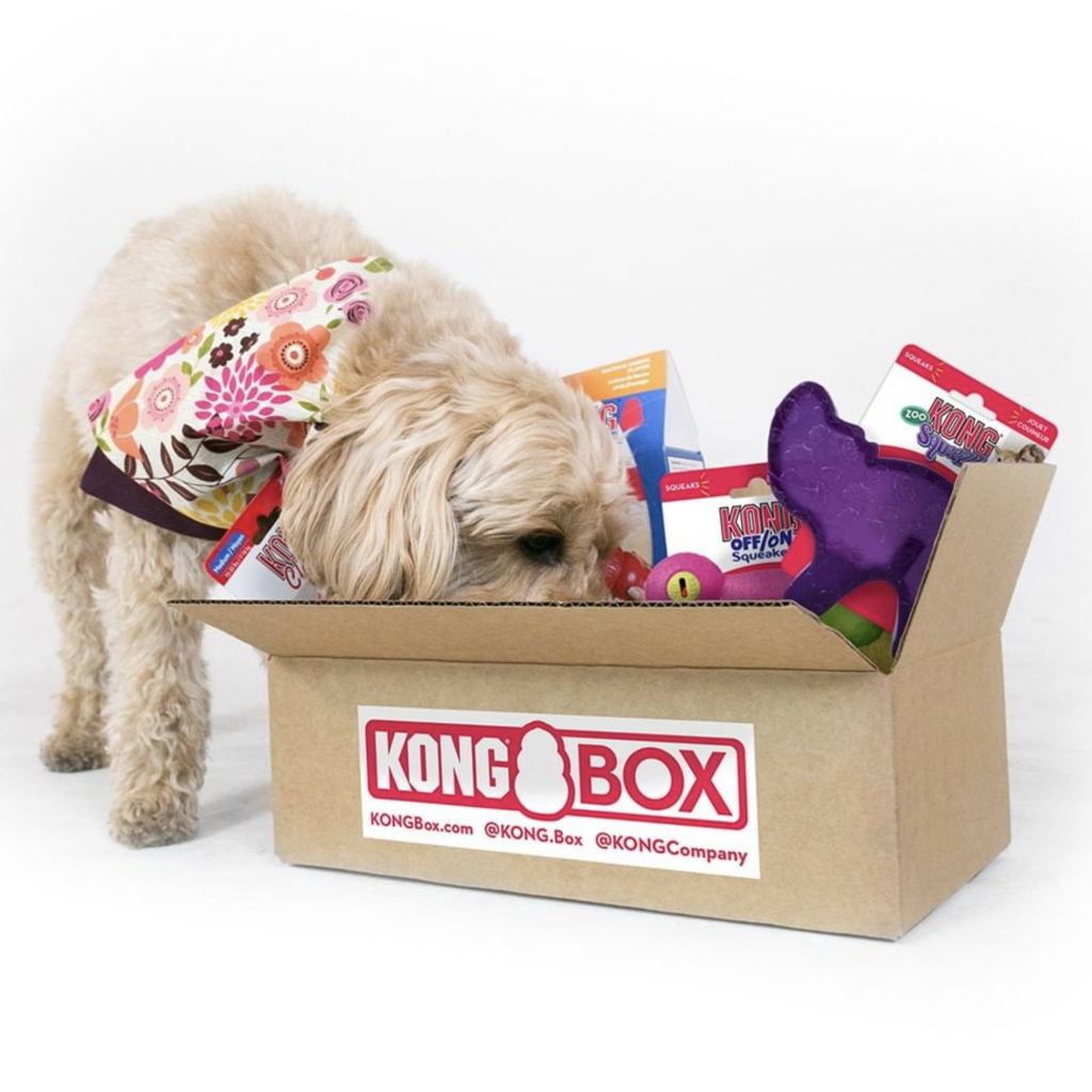 KongBox Dog Box, subscription service, doggy gift box.