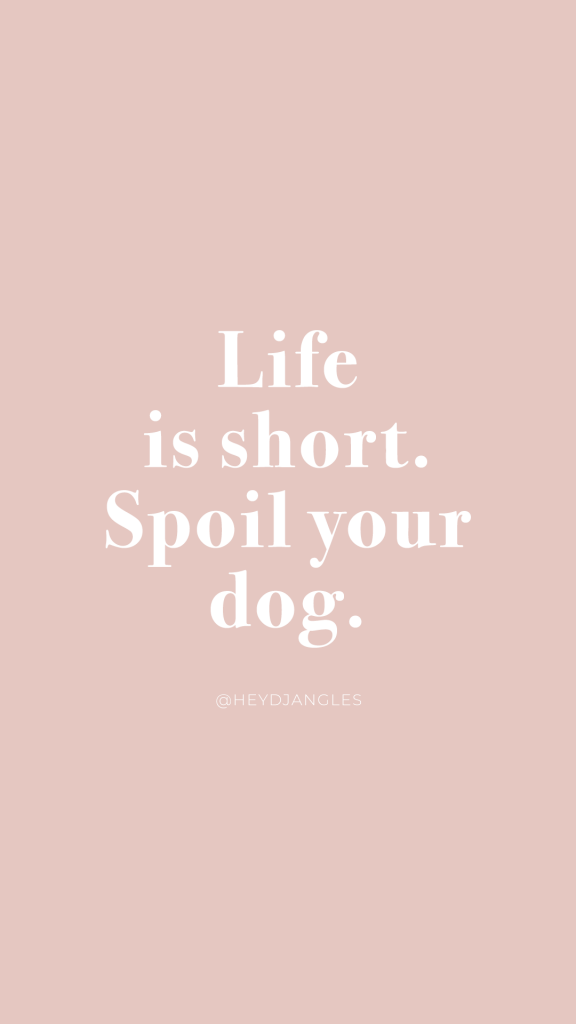 Life is short. Spoil your Dog. Dog quotes, doggo love, dog mom life.