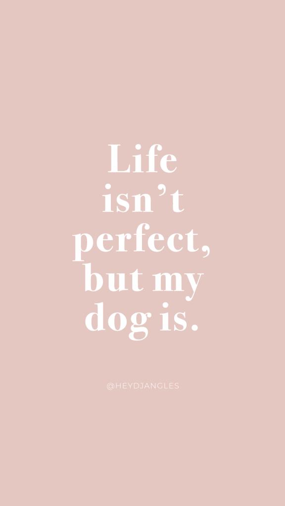 Life isn't perfect, but my dog is. Dog love, dog mom quotes, doggo love.
