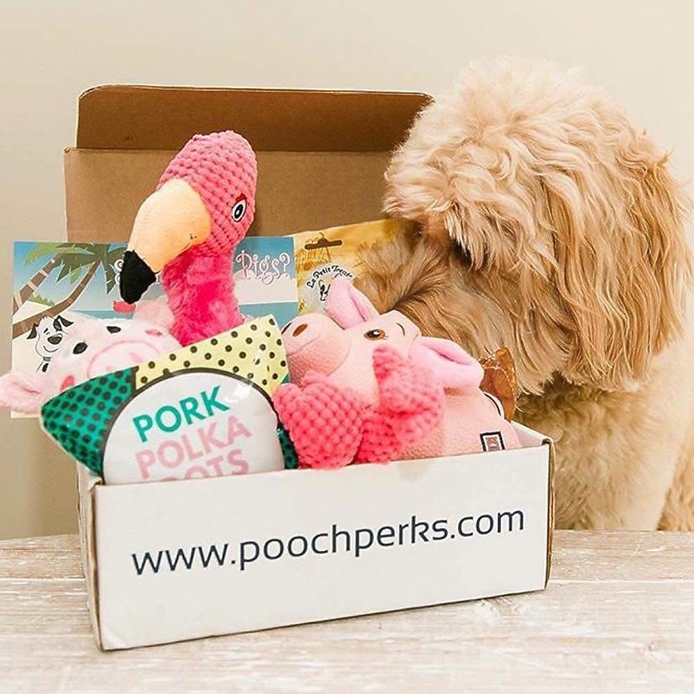 Pooch Perks Popular Pooch Dog Box, doggy gift baskets.