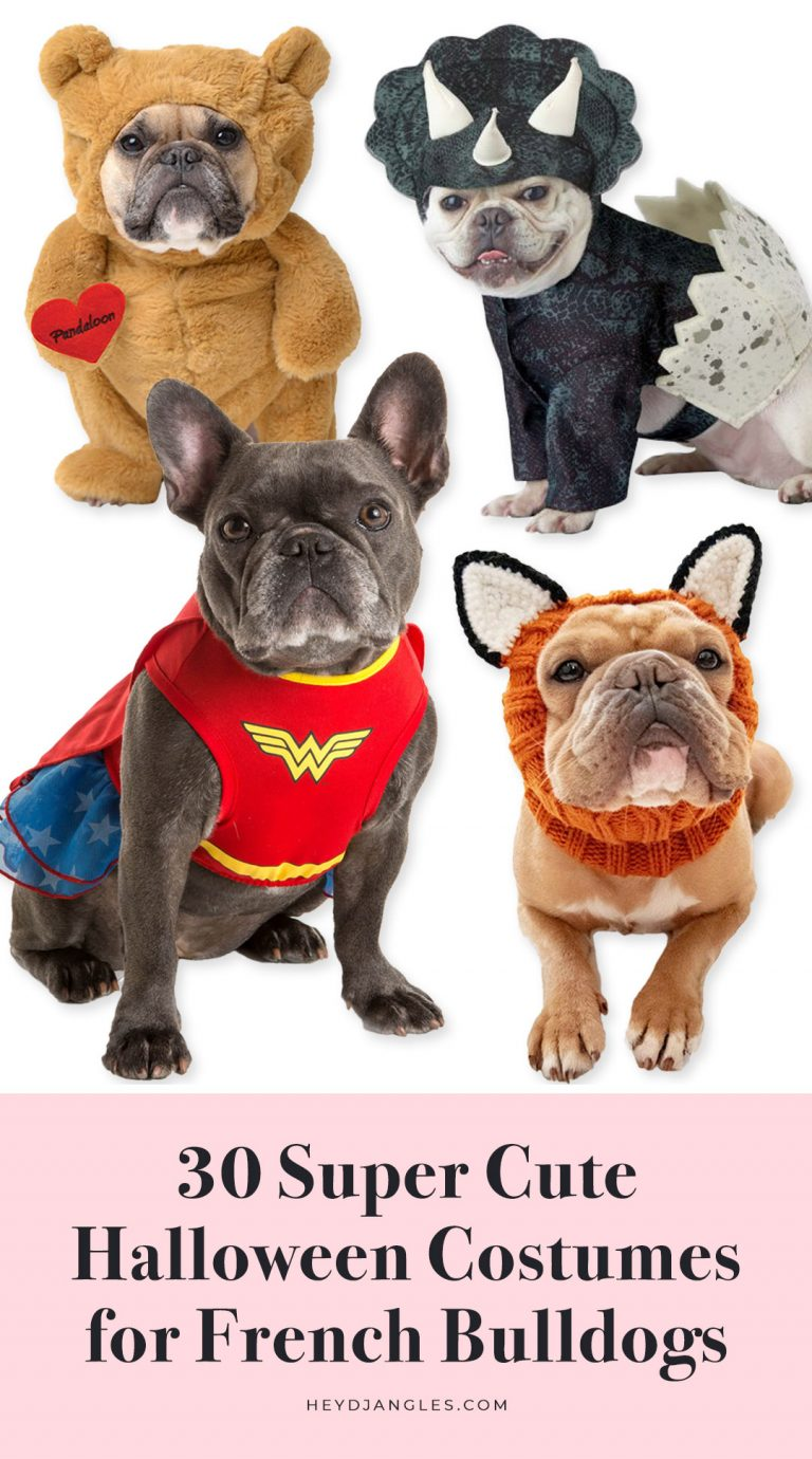 30 Super Cute Halloween Costumes for French Bulldogs - dog Halloween costume ideas, Frenchies, small to medium sized dog breeds, fun.