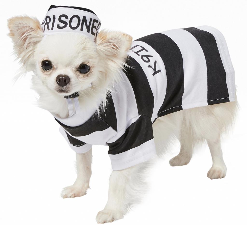 Frisco Prisoner Dog Costume via Chewy
