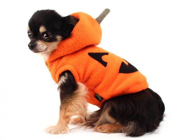 22 Super-Cute Halloween Costumes for Chihuahuas - Pumpkin Jack O Lantern Dog Costume via Etsy (Petit Dog Apparel)