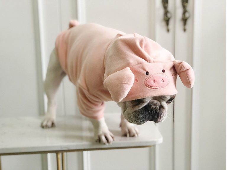 Piggy Puppy Hoodie via FitFrenchie on Etsy.
