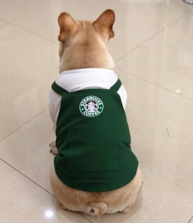 Starbucks Inspired Barista Dog Costumevia FitFrenchieon Etsy. Halloween Costumes for French Bulldogs.