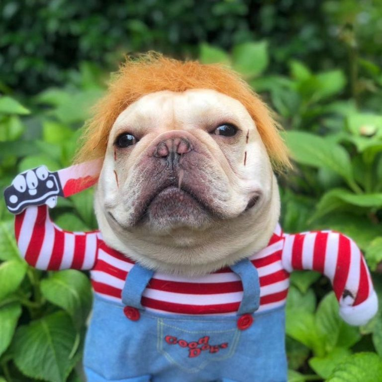 Deadly Doll Dog Costume via Frenchiely. Halloween Costumes for French Bulldogs.