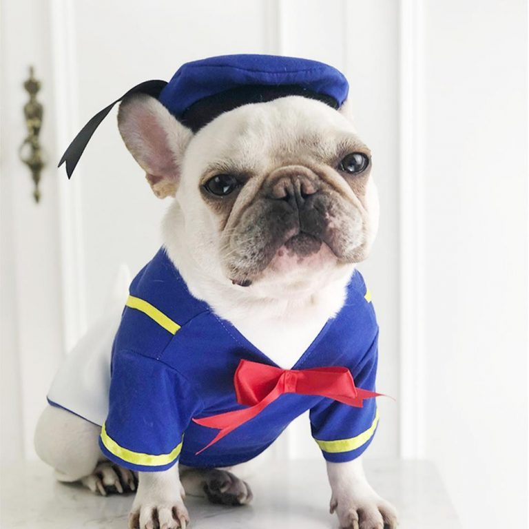 Donald Duck Halloween Dog Costume via Frenchiely. Halloween Costumes for French Bulldogs.