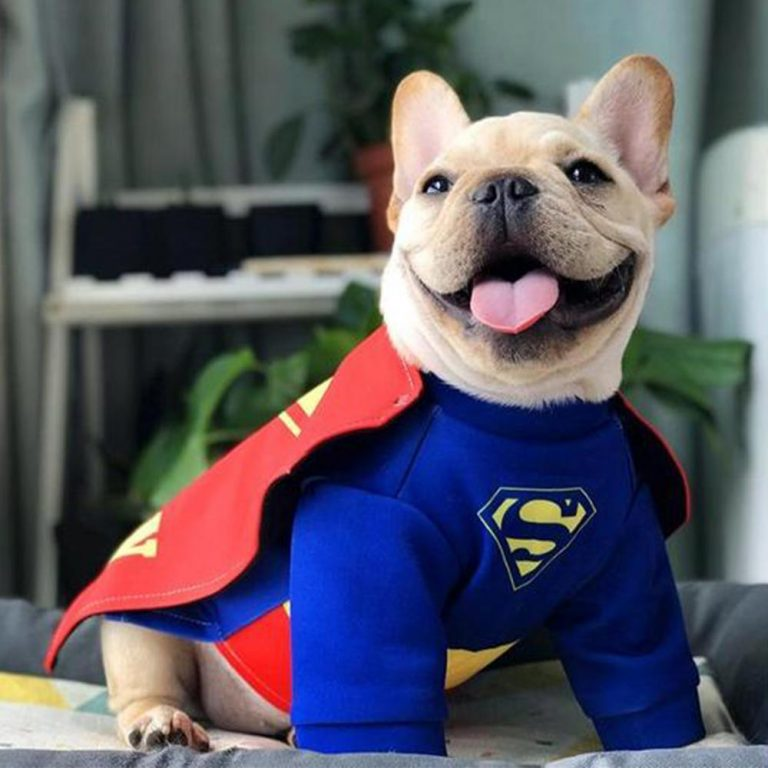 Dog Superman Cosplay Costume via Frenchiely. Halloween Costumes for French Bulldogs.