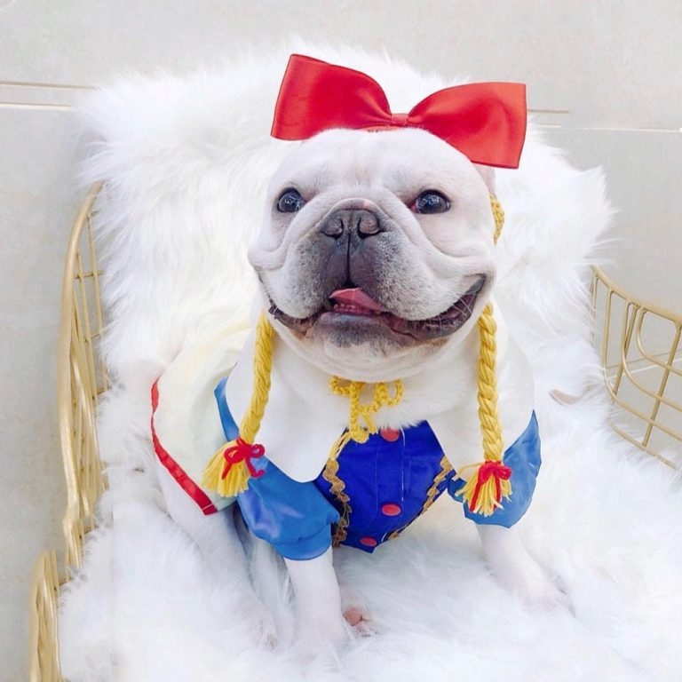 Princess Snow White Dog Costume via Frenchiely. Halloween Costumes for French Bulldogs.