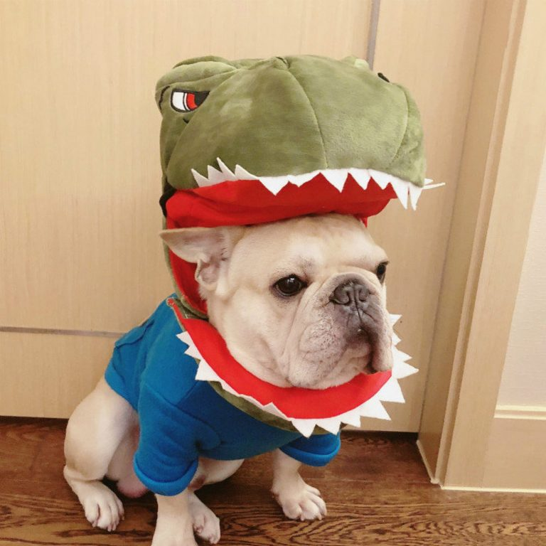 Dinosaur Gator Doggy Costume via FitFrenchieon Etsy. Halloween COstumes for French Bulldogs.