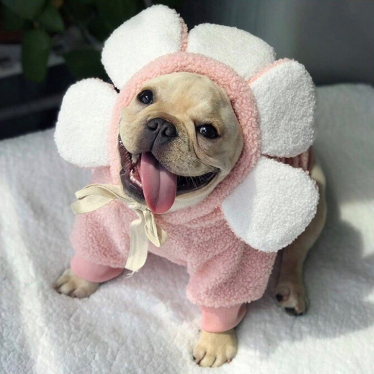 Flower Dog Sweatshirt via FitFrenchie on Etsy.