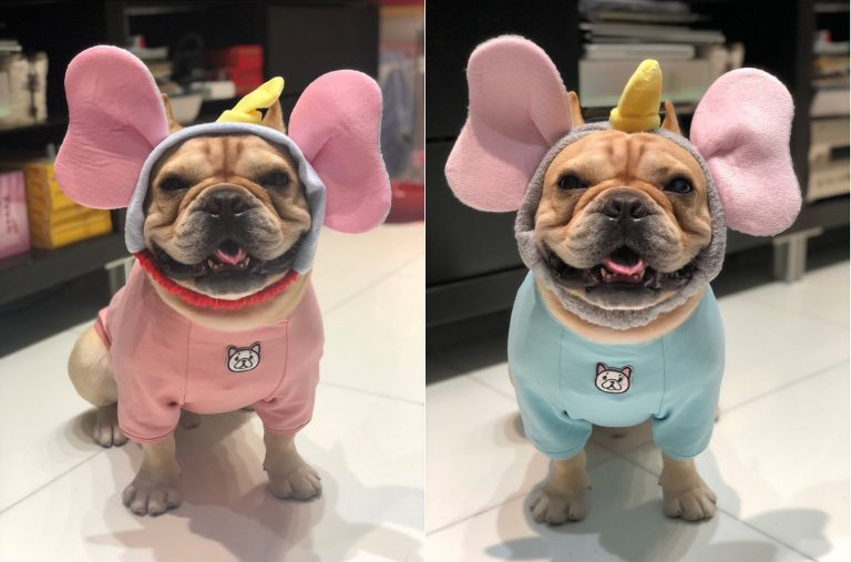 Dumbo Ears Dog Headbandvia FitFrenchieon Etsy.