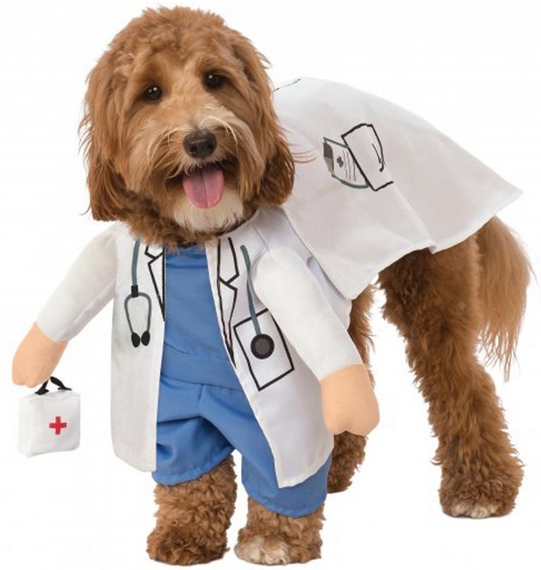 Halloween Costumes for Goldendoodles - Walking Vet Animal Doctor Dog Halloween Costume via Walmart