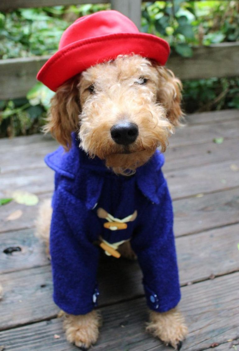 Paddington Bear Inspired Red Cap + Blue Duffle Coat Image and costume via Etsy shop, MonsieurLenny