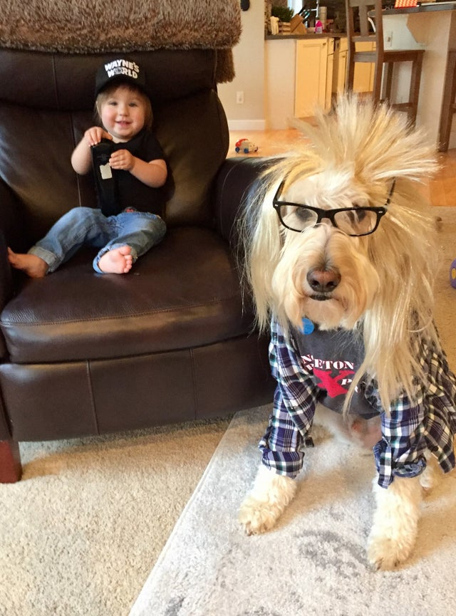"Halloween Costumes for Goldendoodles -IMAGE via Reddit – u/bigcityornot, ""Garth"" from Wayne's World Dog costume"