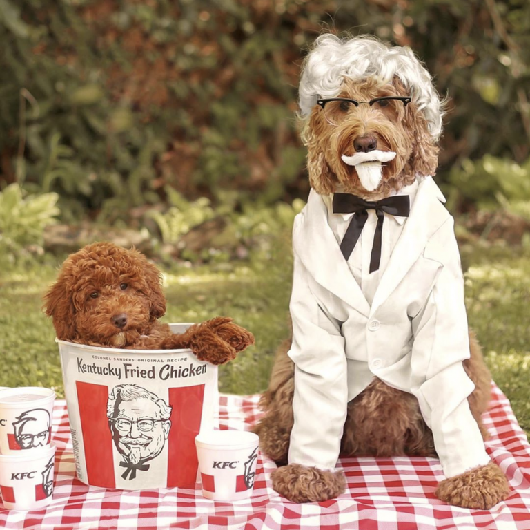 Halloween Costumes for Goldendoodles - Oliver the Goldendoodle as KFC's Colonel Sanders - IMAGE via @oliverthegoldendoodle on Instagram