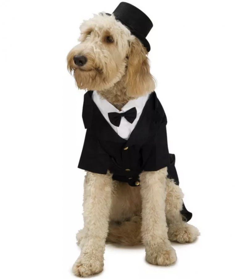 Halloween Costumes for Goldendoodles - Dapper Dog Costume by Rubie's Costume Company via Target