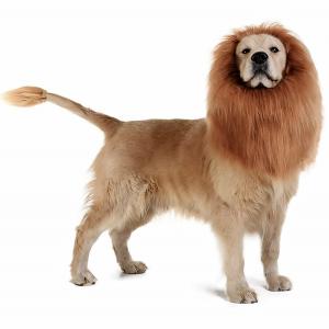 Dog Lion Mane Costume via Tomsenn on Amazon.