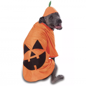 Big Dog Pumpkin Pet Costume by Rubie's Costume Company from Target.