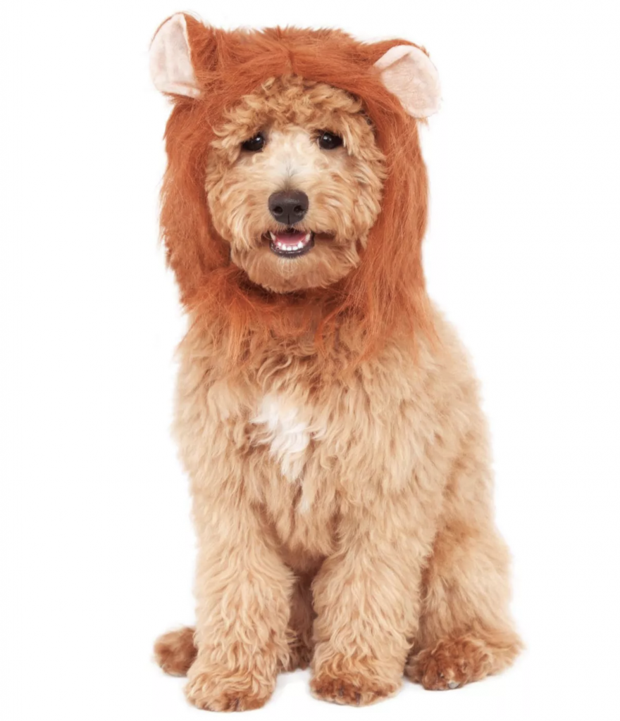 Halloween Costumes for Goldendoodles - Lion Mane for Pet's Wig by Rubie's Costume Company via Target
