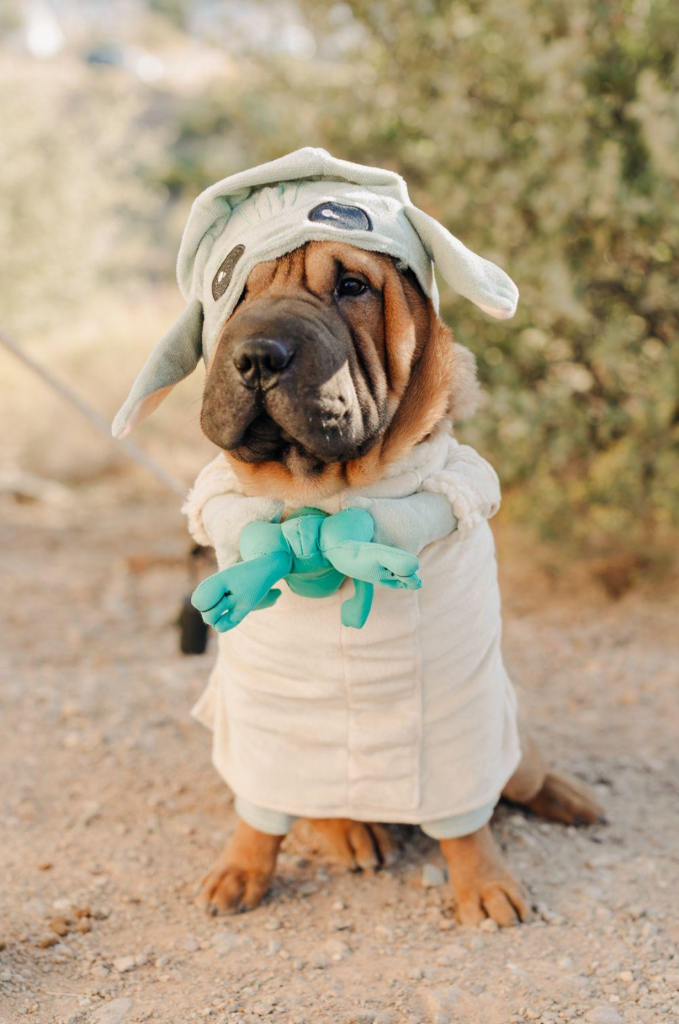 The Mandalorian The Child Dog Halloween Costume via Urban Outfitters.