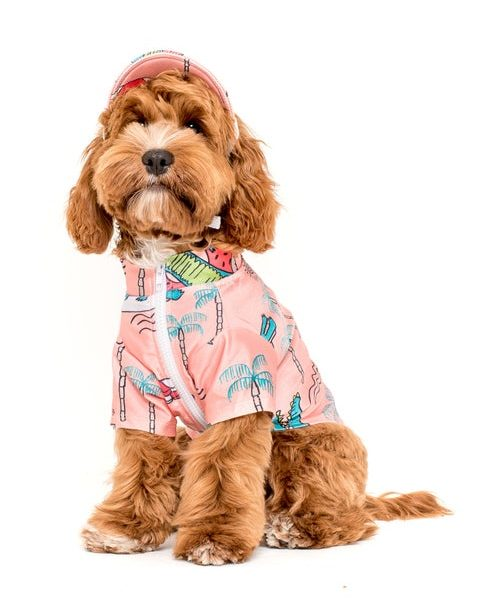 ROUND-UP: Peach Dog Accessories feat. Pink Dog Rashie from Pablo and Co Boutique (Etsy)