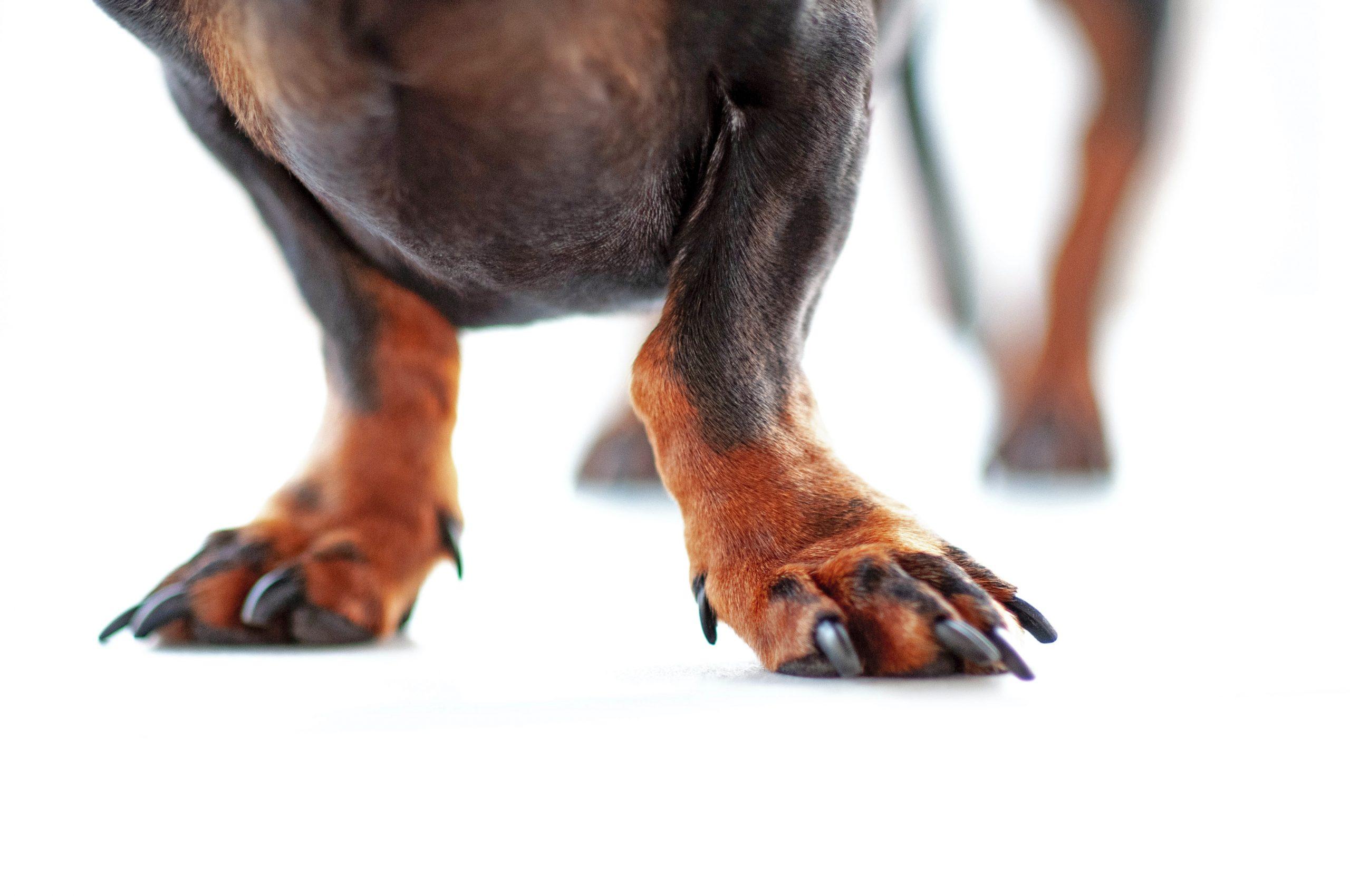 6 Best Non Slip Dog Booties for Indoors - Image by Erda Estremera via Unsplash.