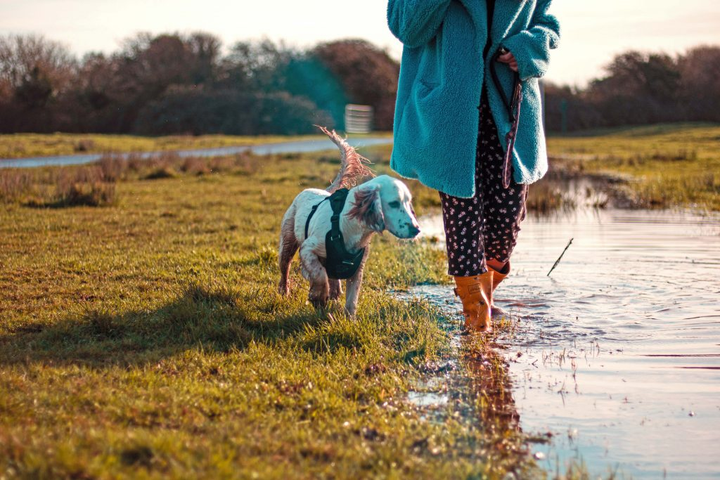9 Best Dog Walking Shoes for Women - Image by Luke Jones via Unsplash.