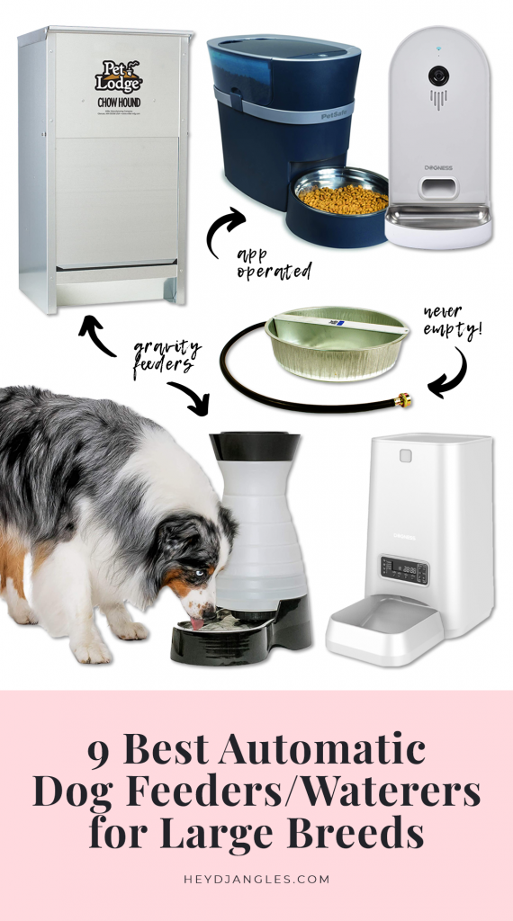 9 Best Automatic Dog Feeders and Waterers for Large Breeds - Hey, Djangles.