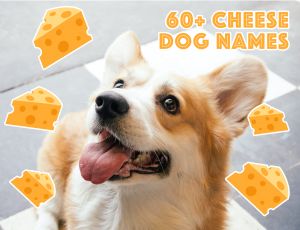 60+ CUTE CHEESE NAMES FOR DOGS - Hey, Djangles. Cheese inspired dog names, cheese related pet names, new dog, dog name ideas, food related dog names, incl. Cheddar, Gouda, Halloumi and more! #dognames #newdog #cheese #cheeselover