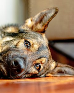 8 Common Dog Medical Emergencies and What to Do - Hey, Djangles. When to take your dog to the emergency vet, how to know when and what to do when your dog is having a medical emergency.