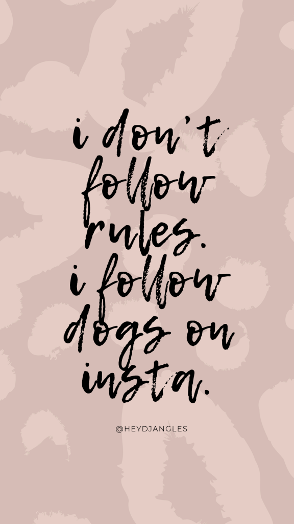 """""""I don't follow rules. I follow dogs on Insta."""", funny quotes for dog lovers."""