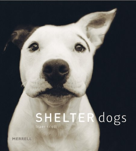 'Shelter Dogs' by Traer Scott - Dog Coffee Table Books