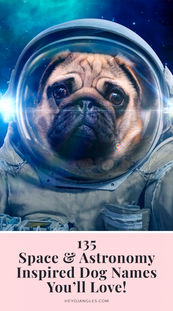 135 Space and Astronomy Inspired Dog Names - Hey, Djangles.