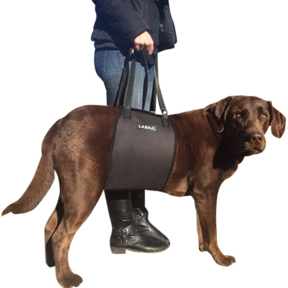 Dog Sling via Amazon, first aid kit for dogs