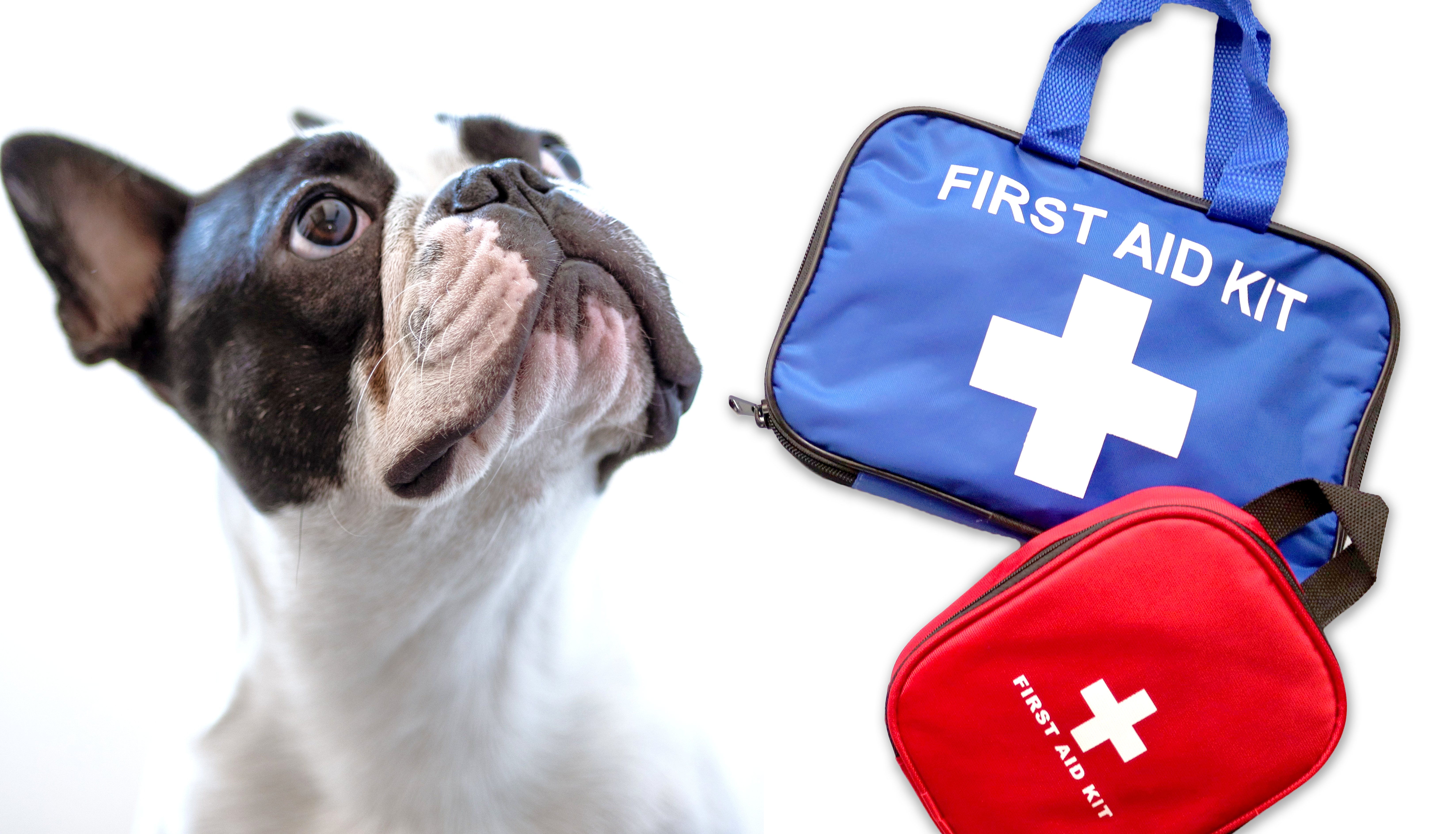 DIY First Aid Kit for Dogs - Essentials List