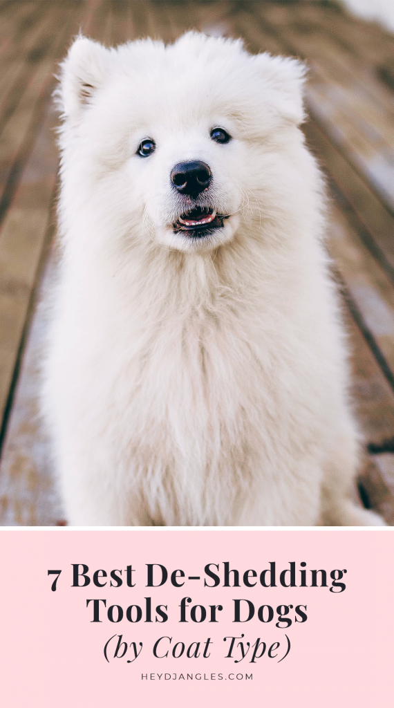 7 Best DeShedding Tools for Dogs (by Coat Type) - White Fluffy Double-Coated Dog, Samoyed Puppy Dog, grooming tools for dogs that shed.