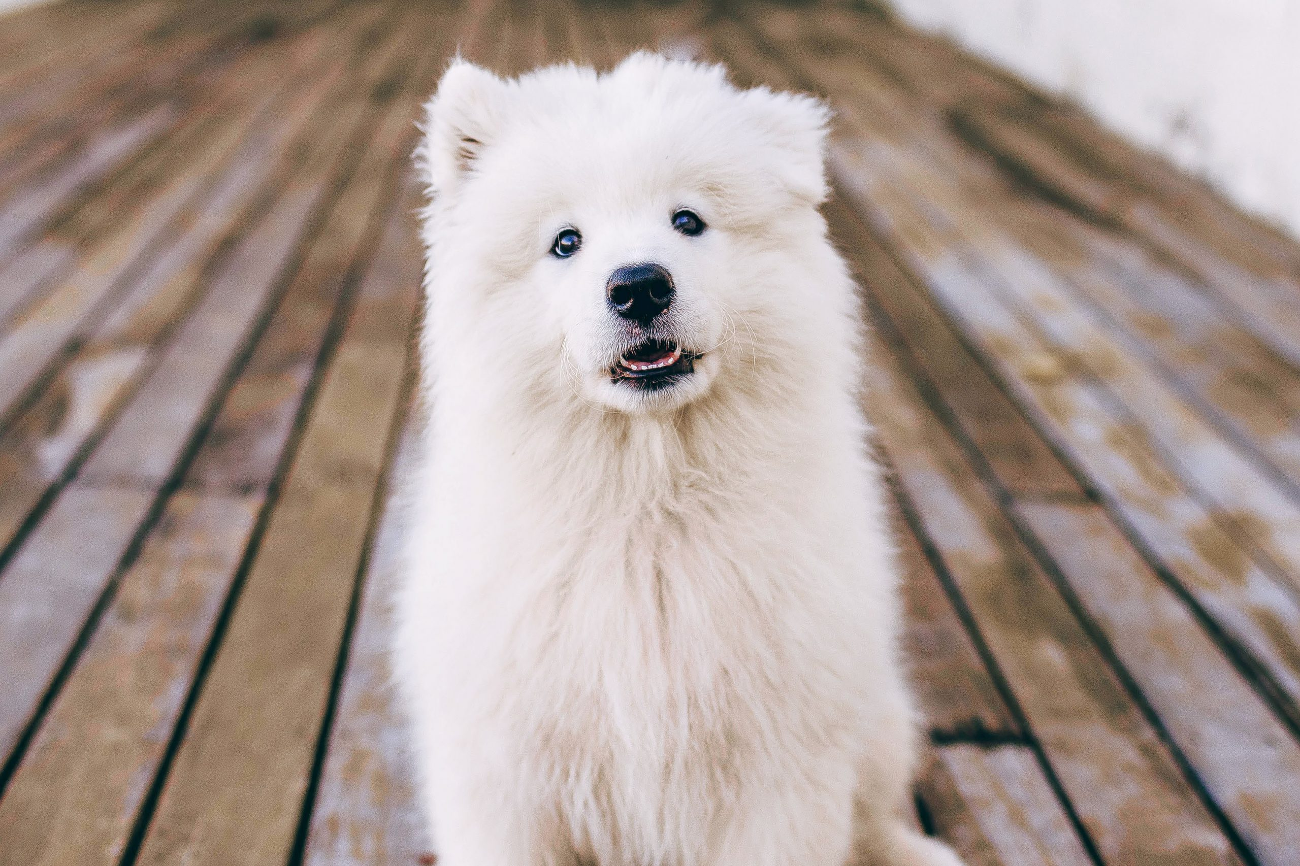 7 Best De-Shedding Tools for Dogs - Short, Medium and Long Coated Dogs