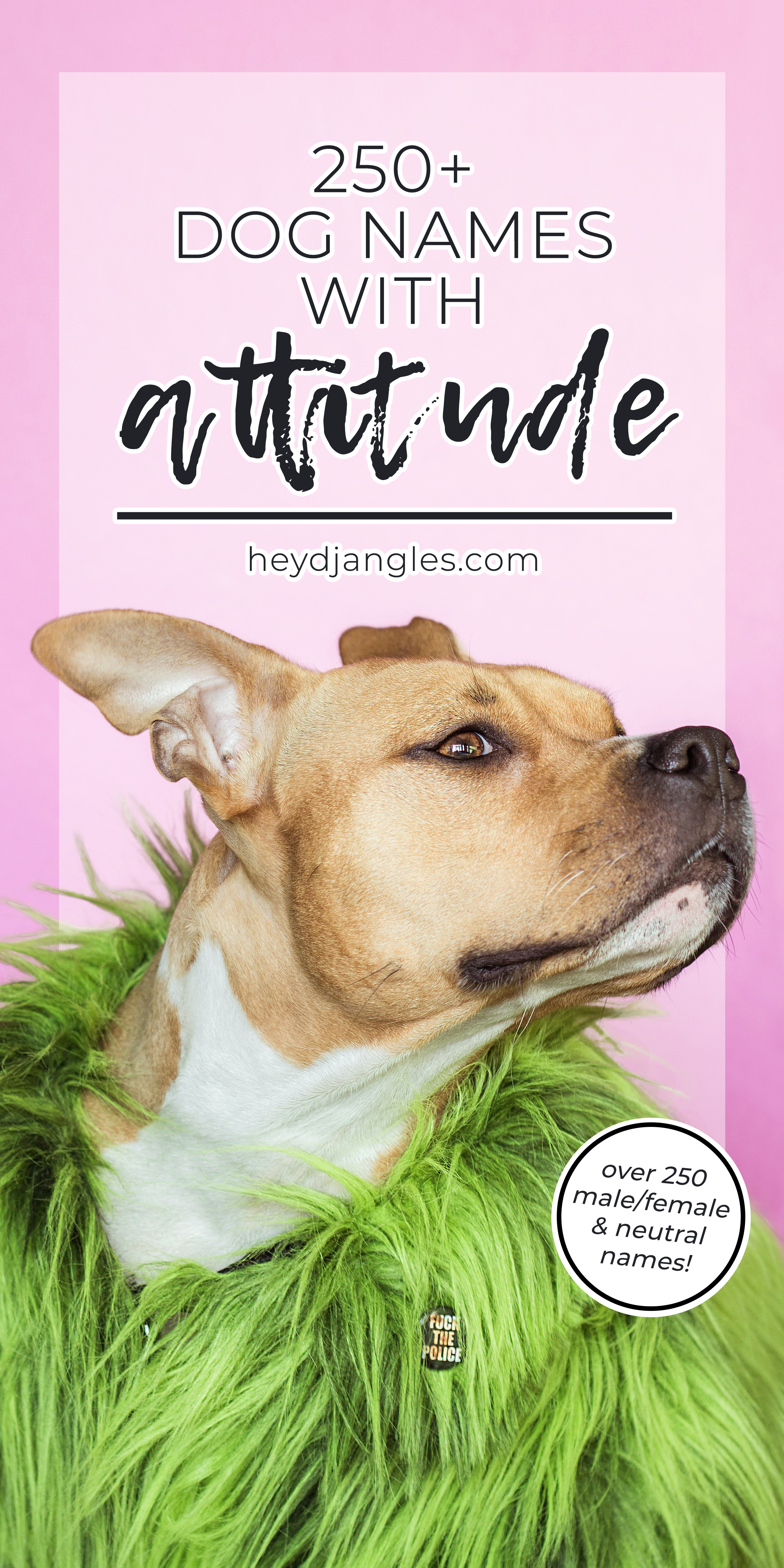 250+ Sassy Dog Names with Attitude - Hey, Djangles. New dog names, puppy name ideas, pet name inspiration.