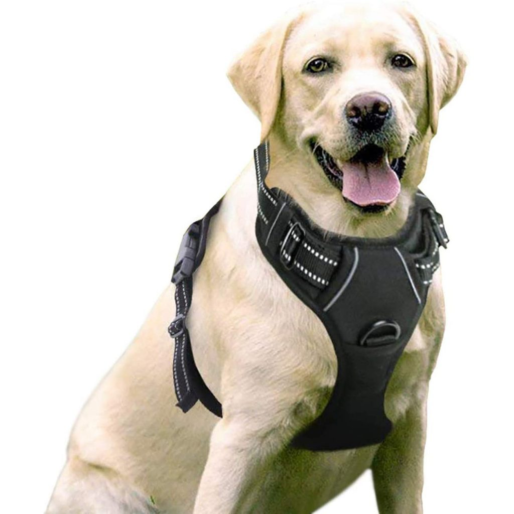 Rabitgoo Pet Harness, image via Rabitgoo/Amazon