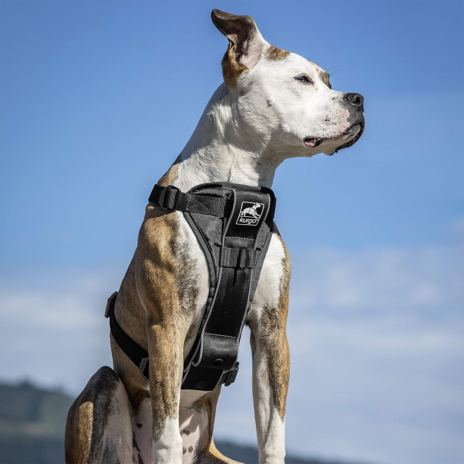 Kurgo Tru-Fit Smart Harness, image via Kurgo.