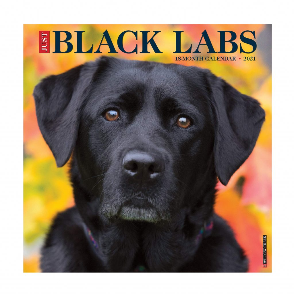 Just Black Labs Calendar via Amazon