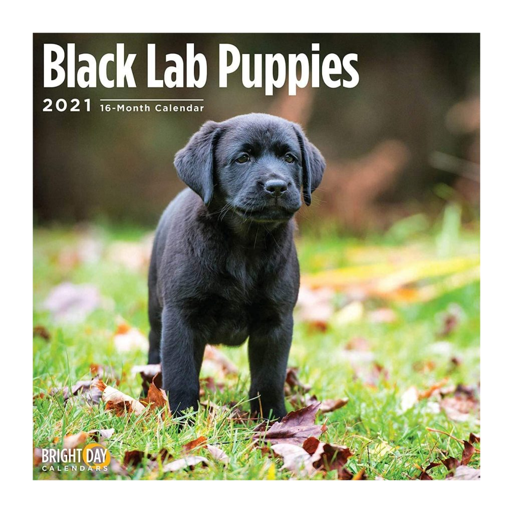 Black Lab Puppies Calendar via Amazon